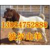 北京種羊場北京大型養羊場北京波爾山羊