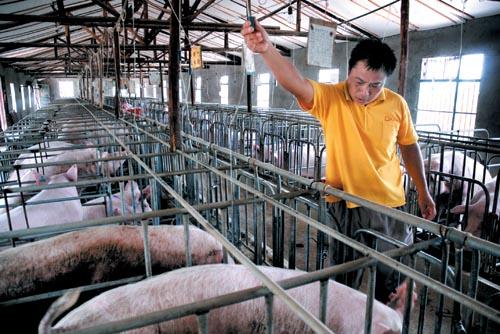 贵州科学养猪示范基地
